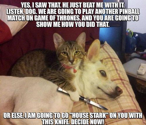 Cat-Dog-Got-Knife