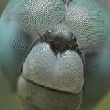 Pinball Excuse #006 – Dragonfly