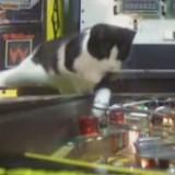 Super Cross Combo High Speed Kitty Helpers