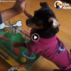 Pinball Dog