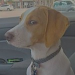 dog_pinball1