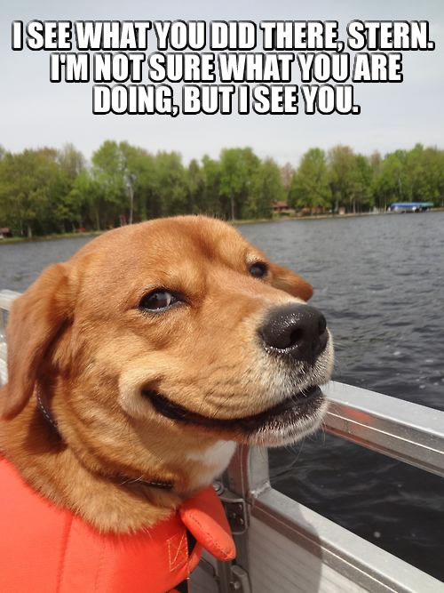 sarcasticdog-stern