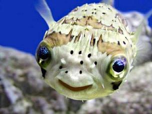 smiling-fish
